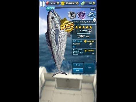 ace fishing wild catch guide