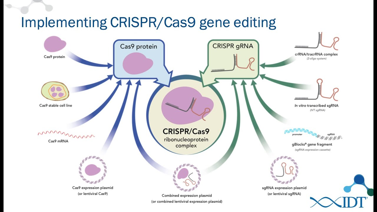 how to design guide rna for crispr