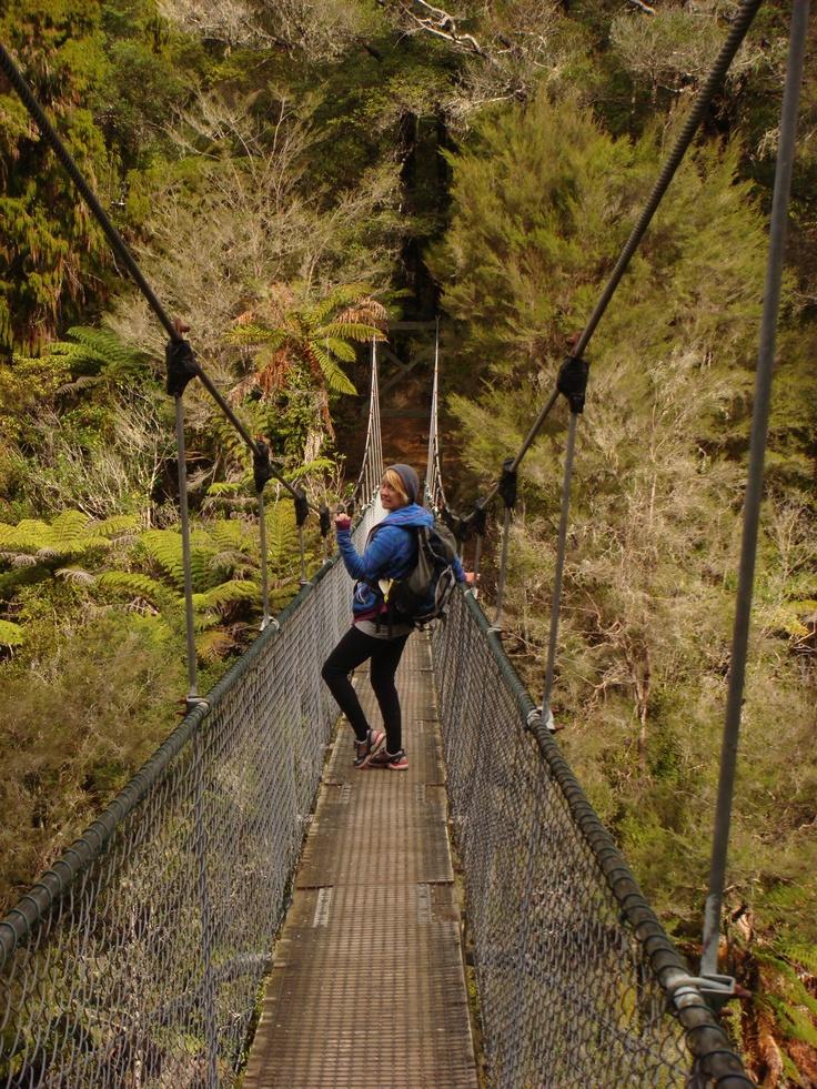 wilsons abel tasman guided walks