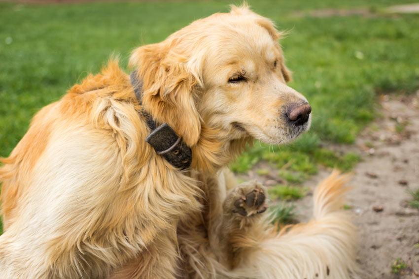 how do i get a guide dog